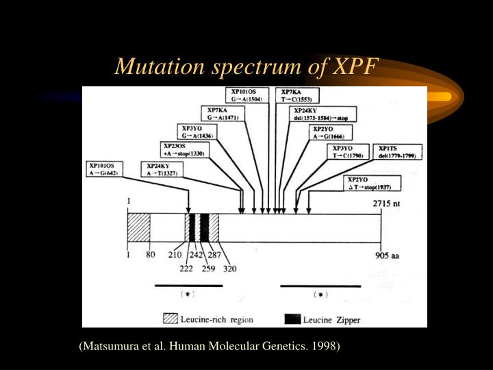 Mutation spectrum of XPF