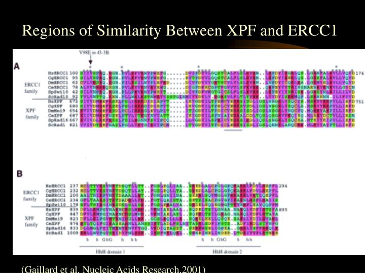 Regions of Similarity Between XPF and ERCC1