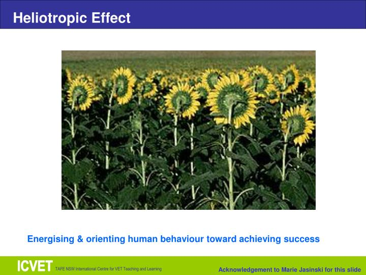 Heliotropic Effect