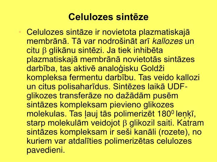 Celulozes sintēze