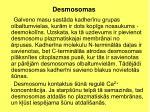 desmosomas2
