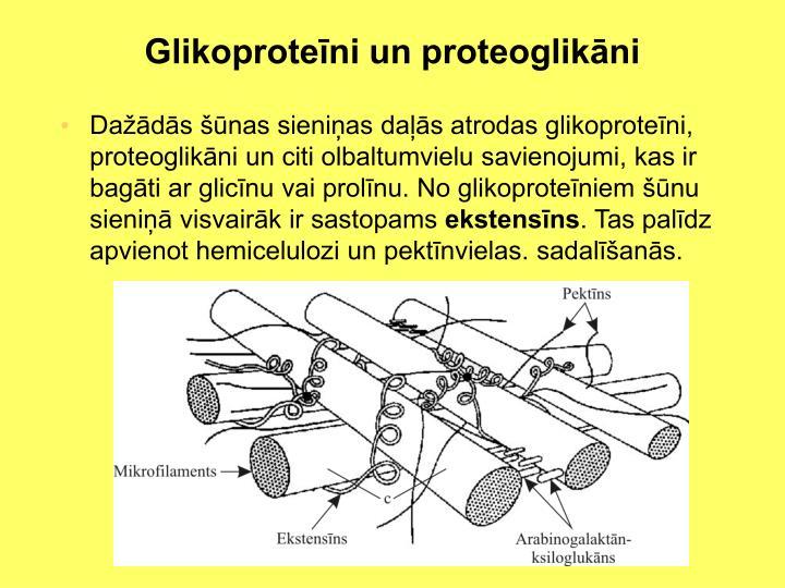 Glikoproteīni un proteoglikāni