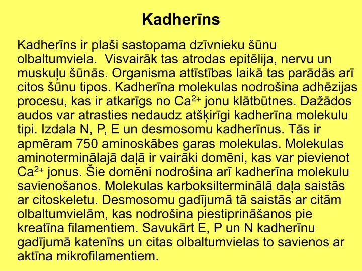 Kadherīns