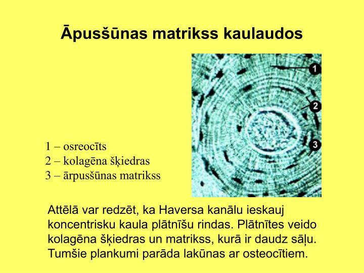 Āpusšūnas matrikss kaulaudos