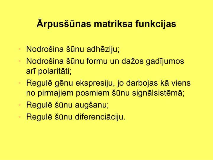 Ārpusšūnas matriksa funkcijas