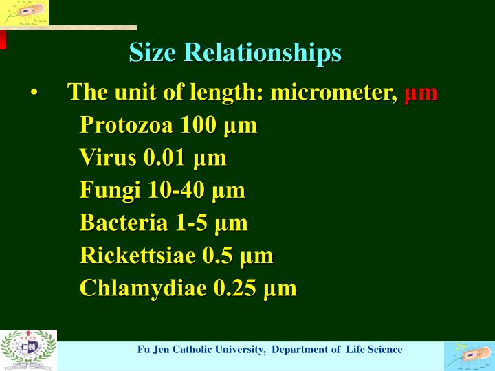 Size Relationships