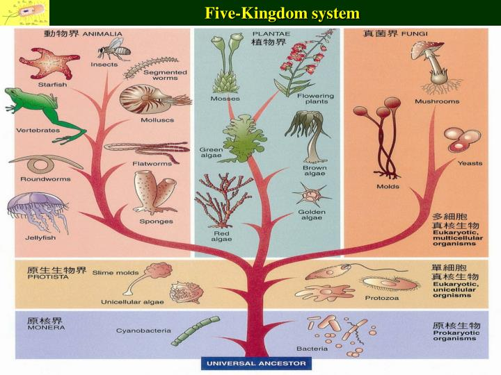Five-Kingdom system