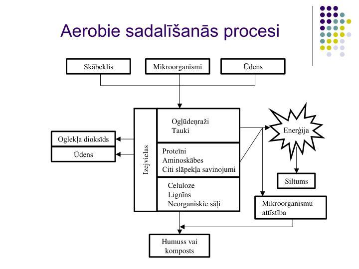 Aerobie sadalīšanās procesi
