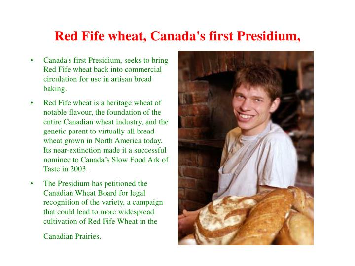 Red Fife wheat, Canada's first Presidium,