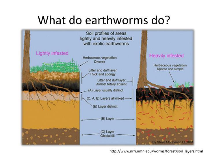 What do earthworms do?