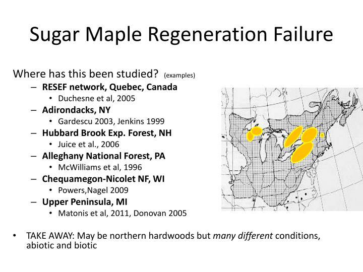 Sugar Maple Regeneration Failure