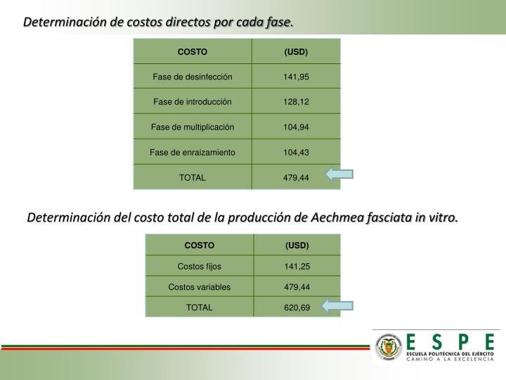 Determinación de costos directos por cada fase.