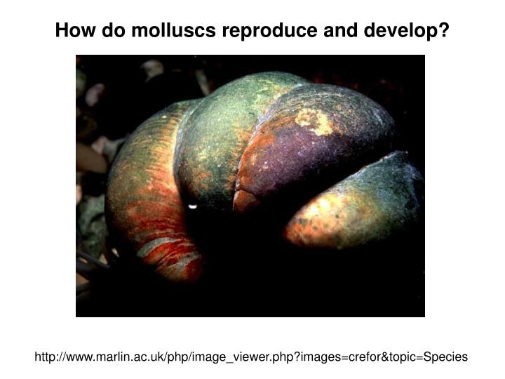 How do molluscs reproduce and develop?