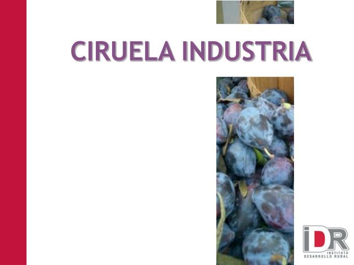 CIRUELA INDUSTRIA