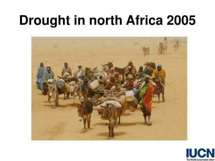 Drought in north Africa 2005