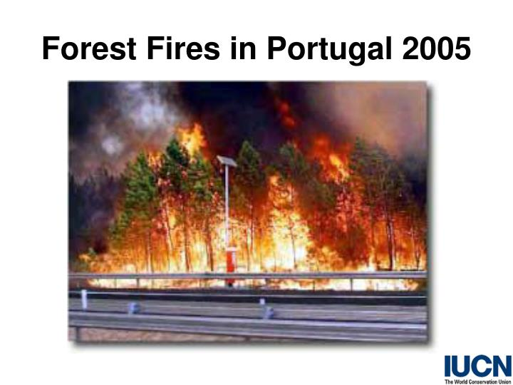 Forest Fires in Portugal 2005