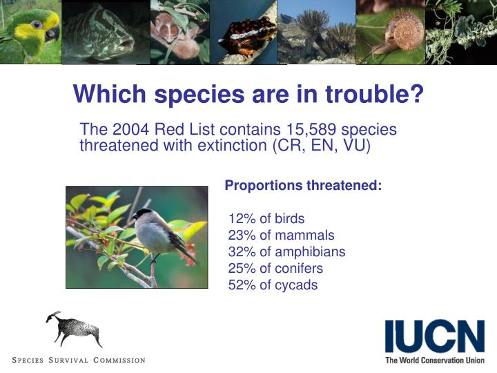 Which species are in trouble?