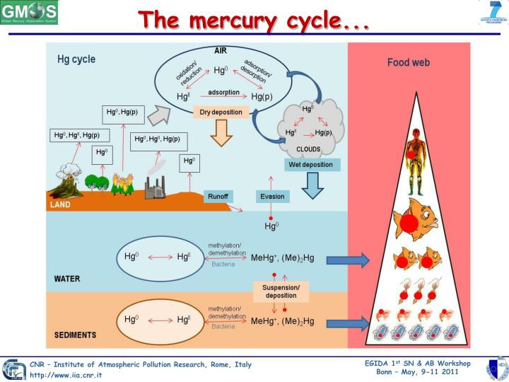 The mercury cycle...