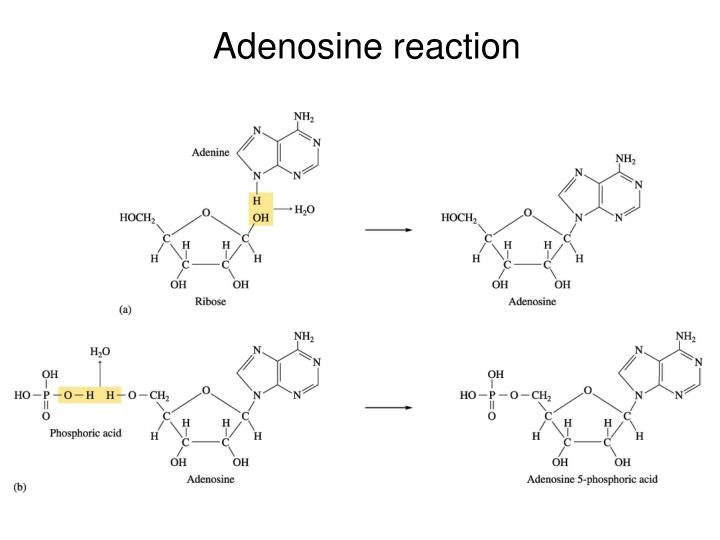 Adenosine reaction