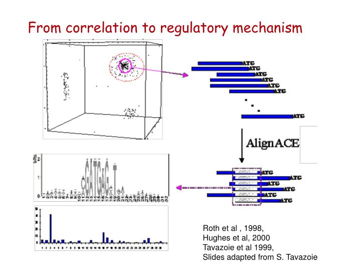 From correlation to regulatory mechanism