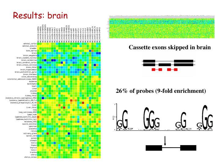 Results: brain