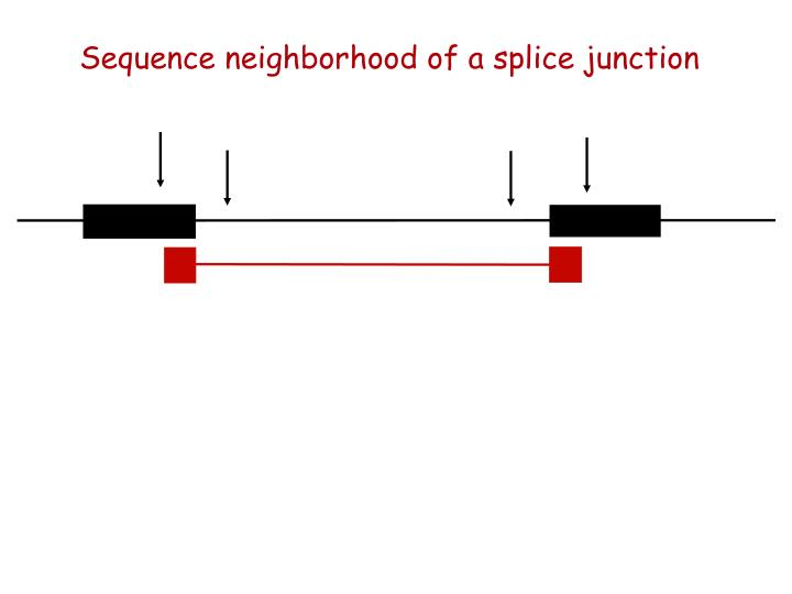 Sequence neighborhood of a splice junction