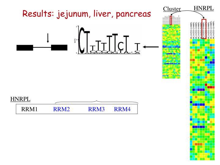 Results: jejunum, liver, pancreas