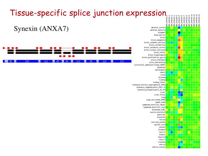 Tissue-specific splice junction expression