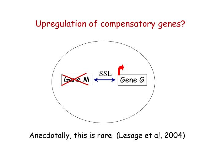 Upregulation of compensatory genes?