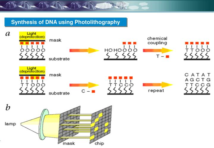 Synthesis of DNA using Photolithography
