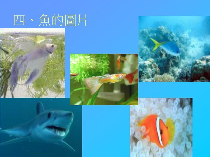 四、魚的圖片