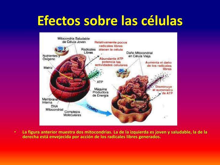 Efectos sobre las células