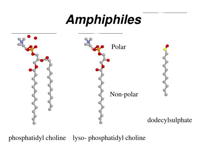 Amphiphiles