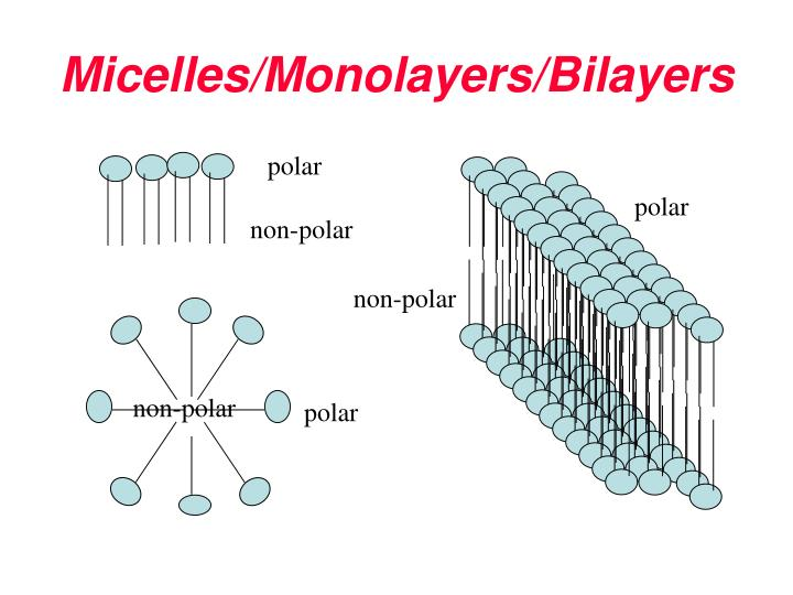 Micelles/Monolayers/Bilayers