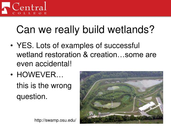 Can we really build wetlands?
