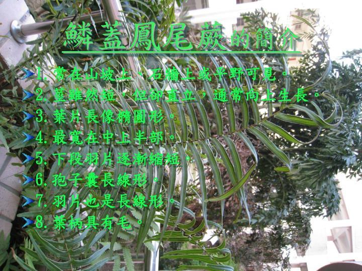 鱗蓋鳳尾蕨