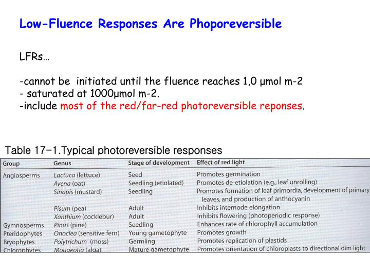 Low-Fluence Responses Are Phoporeversible