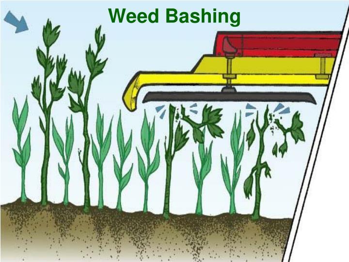 Weed Bashing