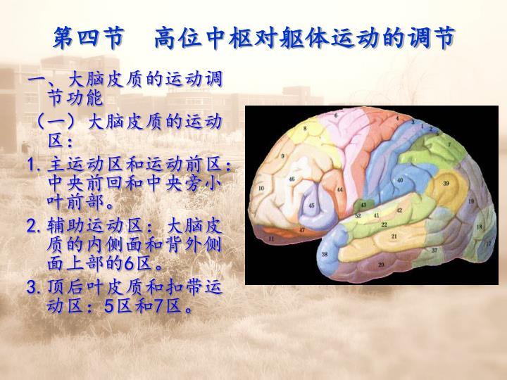 第四节  高位中枢对躯体运动的调节