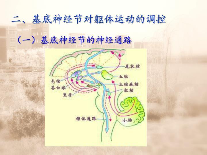 二、基底神经节对躯体运动的调控
