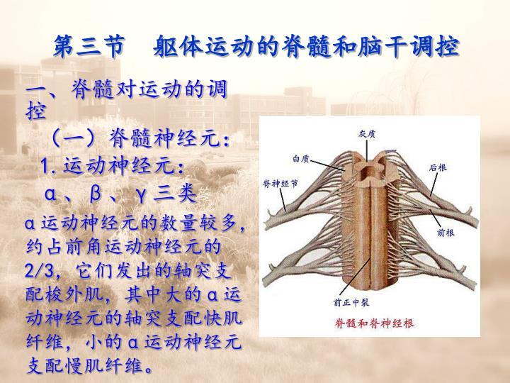 第三节  躯体运动的脊髓和脑干调控