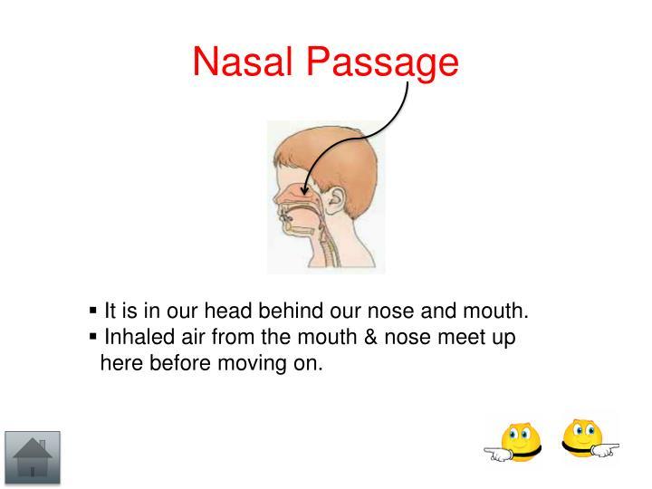 Nasal Passage