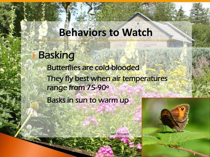 Behaviors to Watch