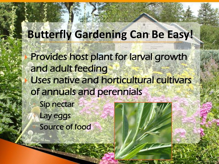 Butterfly Gardening Can Be Easy!