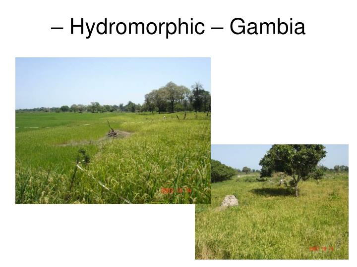 – Hydromorphic – Gambia