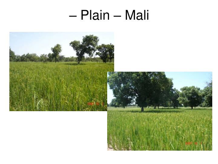 – Plain – Mali