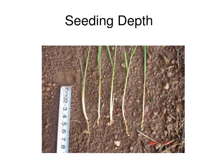 Seeding Depth