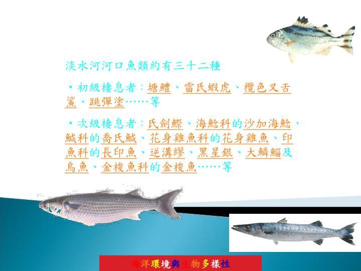 淡水河河口魚類約有三十二種