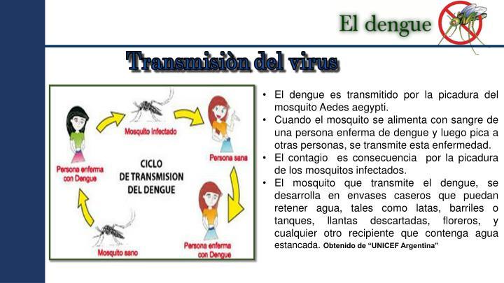 El dengue es transmitido por la picadura del mosquito Aedes
