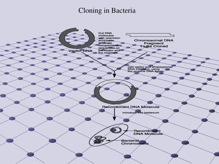 Cloning in Bacteria